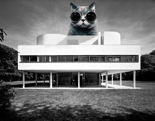 Hey, how'd this picture of the Le Corbusier kitty get in here?